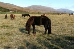 Zirgi dabas ainavā